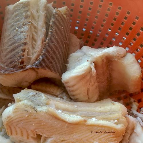 pesce palombo